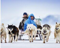 Slædetur Grønland